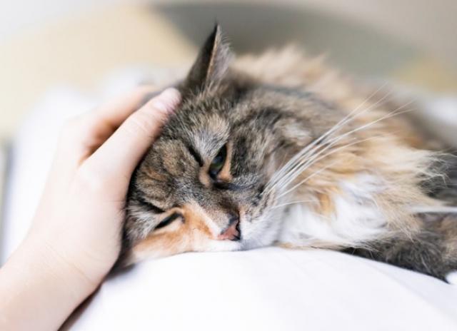 CBD Oils Enhance Pets' Health